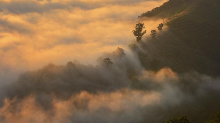 sunrise, terraces, trees, Thailand, landscape, field, nature, mist, hill