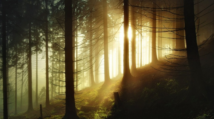 hill, Germany, landscape, nature, trees, morning, sunrise, forest, sunlight, mist