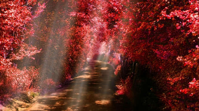 dirt road, red, leaves, fall, shrubs, path, nature, trees, landscape, mist, sun rays, sunlight