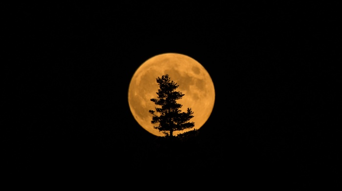 silhouette, moon, trees