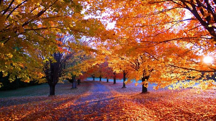 orange, trees, sunrise, fall, nature, path, sunlight, park, morning, landscape, grass, leaves