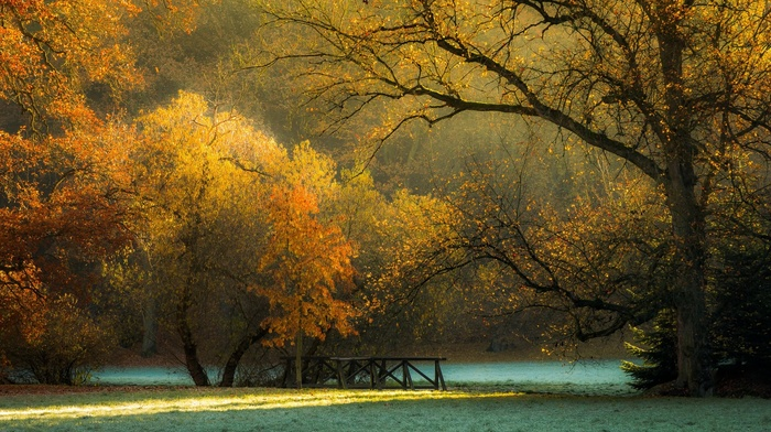 morning, fall, Czech Republic, frost, trees, park, landscape, foliage, nature, grass, sunlight
