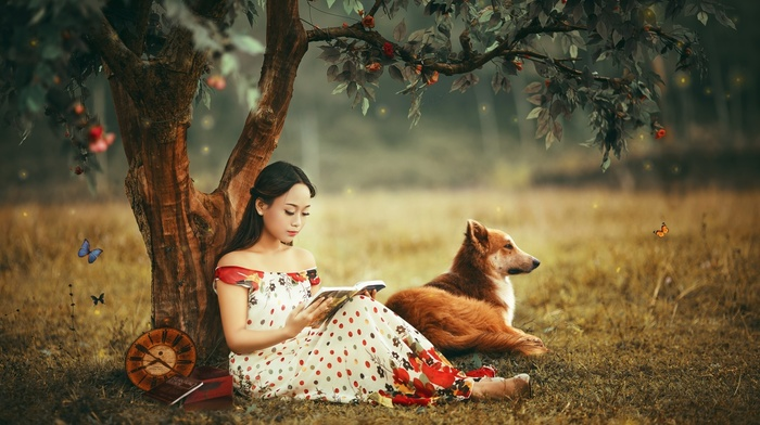 trees, Asian, dog, butterfly, books