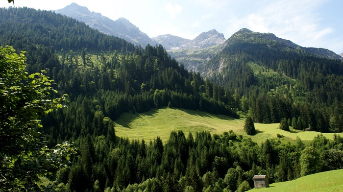 forest, mountain, nature, hill