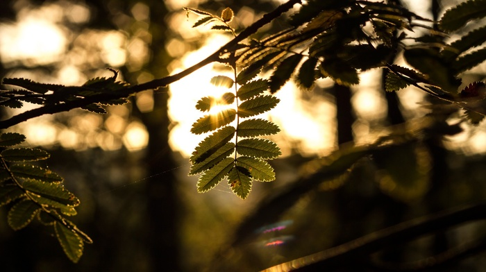 bokeh, nature, leaves