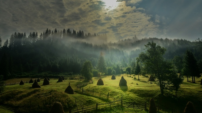 forest, landscape, morning, green, sky, sunlight, hill, trees, field, fence, sunrise, clouds, nature, mist