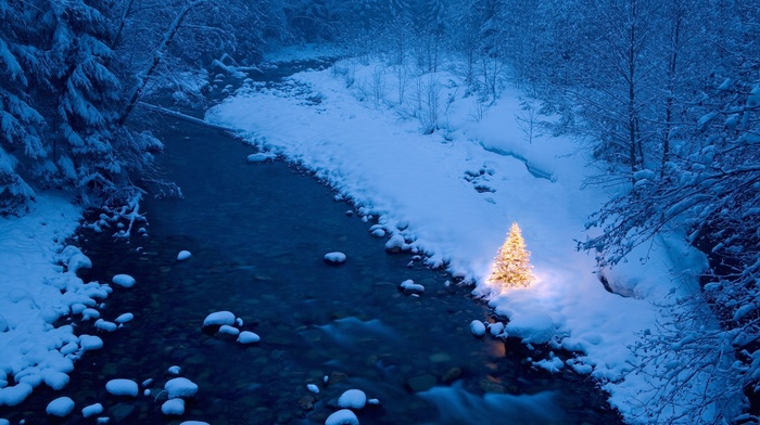 trees, Christmas, snow, Christmas tree, river, forest