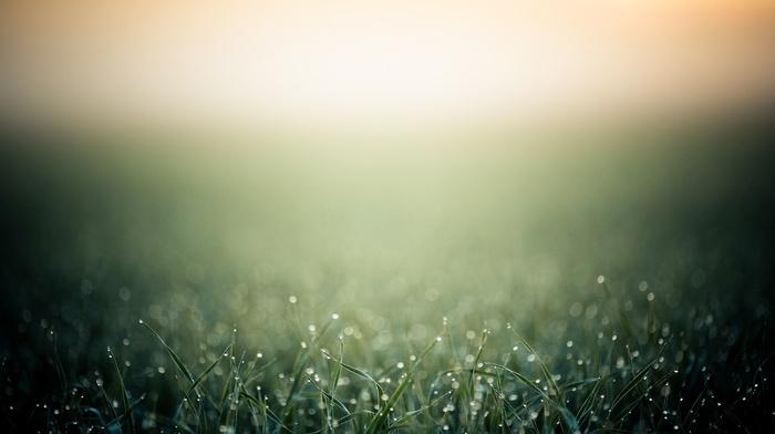 grass, macro, dew