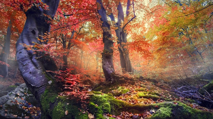 mist, moss, colorful, leaves, trees, nature, fall, landscape, forest, sunrise