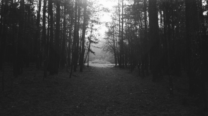 monochrome, white, black, landscape, nature, forest, night, trees