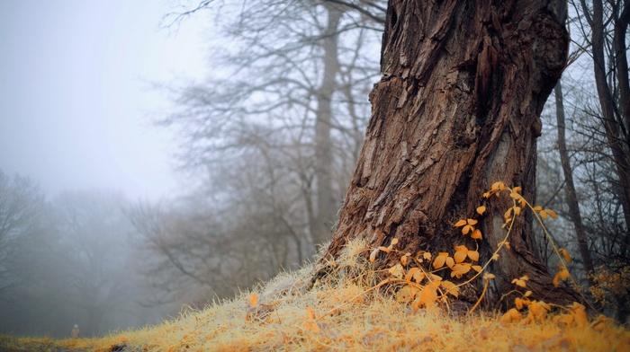 mist, trees