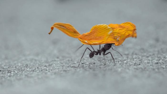 hymenoptera, ants, insect, sand, macro