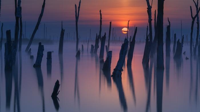 mist, reflection, dead trees, nature, atmosphere, lake, sunset, landscape, sky, sunlight