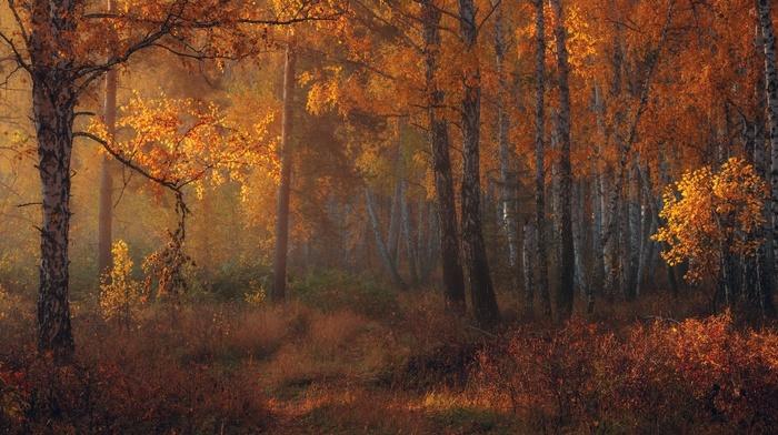 fall, amber, leaves, sunlight, trees, morning, shrubs, nature, forest, landscape