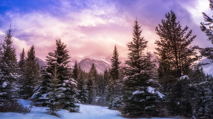 pine trees, Canada, Alberta, landscape, snow, winter, clouds, forest, nature, sunlight, mountain