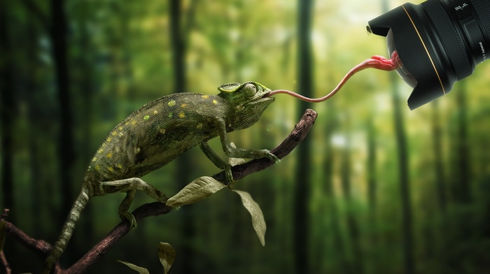 flies, Nikon, animals, lens, reflection, humor, camera, nature, forest, trees, branch, depth of field, tongues, chameleons, photo manipulation, leaves