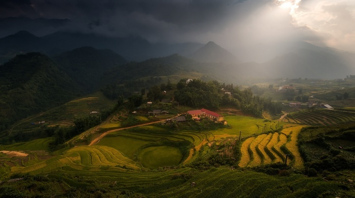 trees, village, sun rays, sunlight, rice paddy, tea, mountain, terraces, landscape, mist, nature, clouds, field, Vietnam