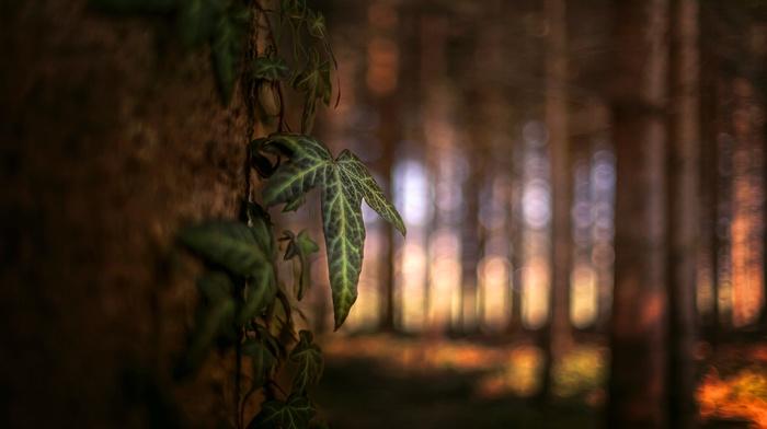 plants, macro, trees