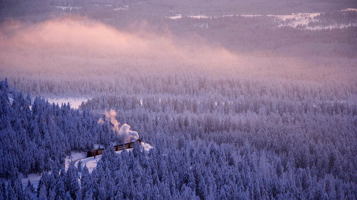 forest, train, snow, landscape, Germany, saxonia, pine trees