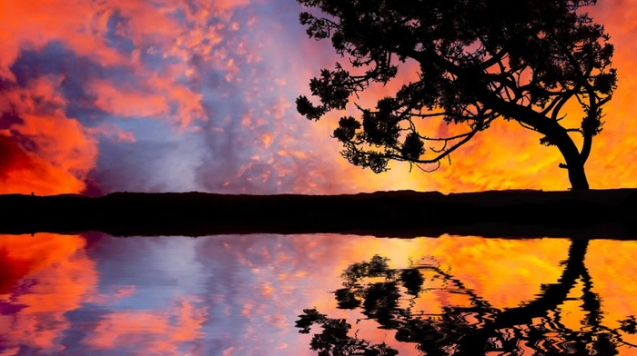 trees, landscape, sky, reflection