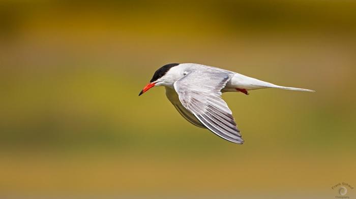 birds, animals, nature, photography
