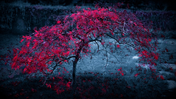 trees, red leaves