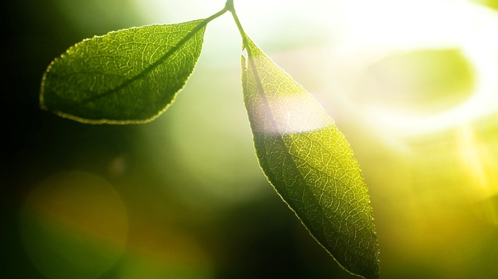 macro, photography, depth of field, nature, plants, leaves