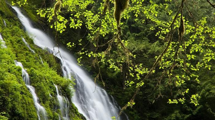 nature, waterfall, jungle