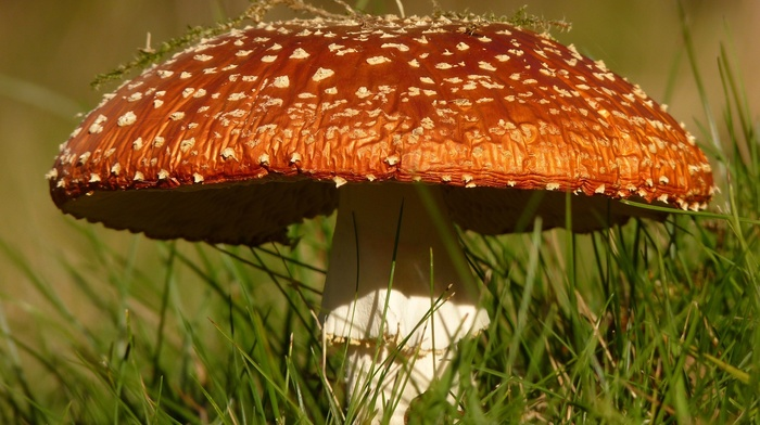 mushroom, photography