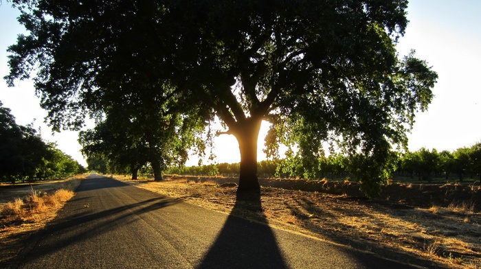 plants, nature, photography, trees, summer, road, shadow, Sun, landscape