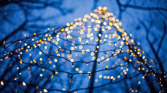 trees, lights, bokeh, winter, depth of field, christmas lights