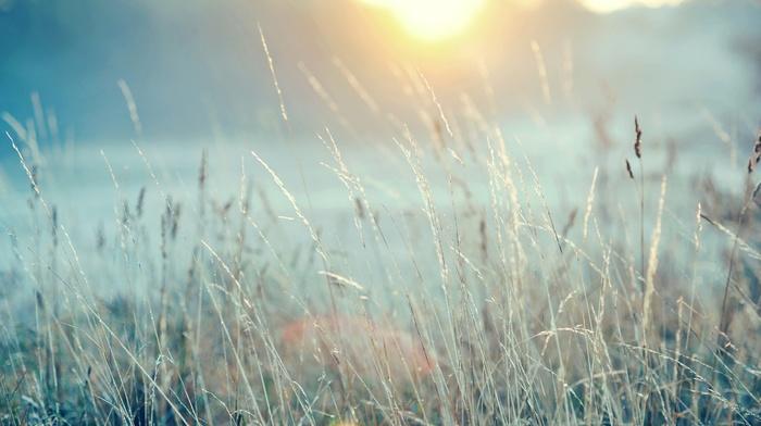 nature, plants, landscape, field, photography, depth of field