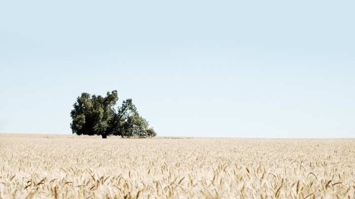 landscape, field, wheat, nature, photography, trees, plants