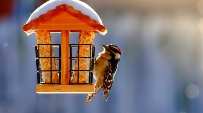 nature, birds