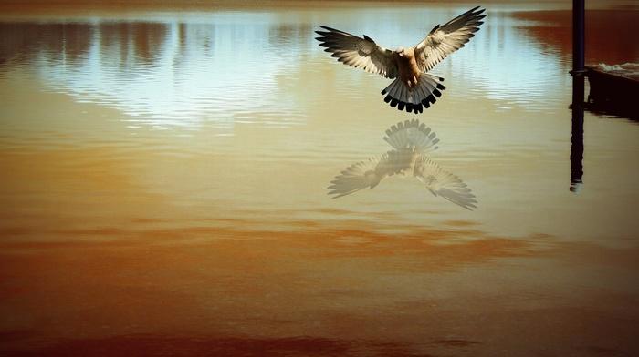 photography, reflection, nature, birds, water, photo manipulation, animals