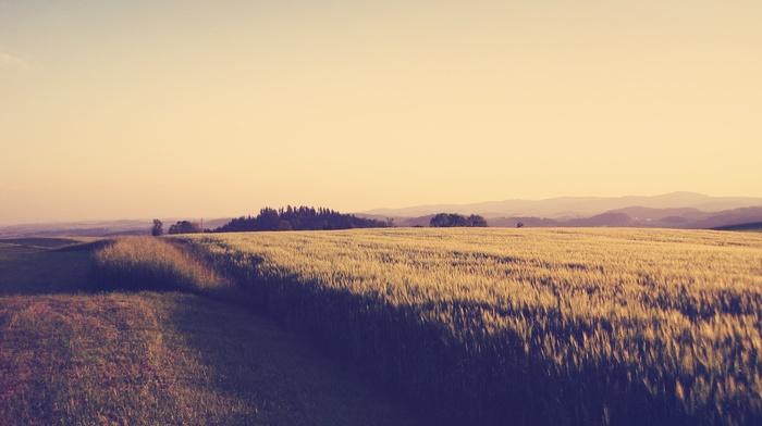 nature, plants, trees, photography, field, landscape