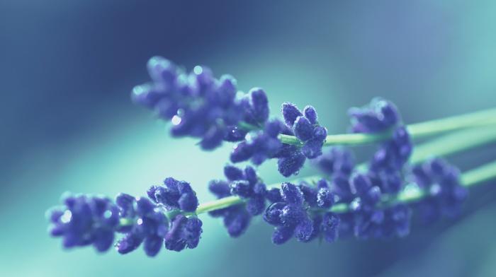 macro, plants, photography, nature