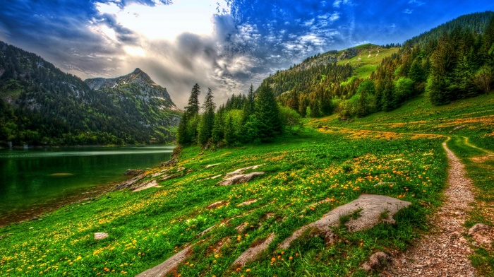 forest, mountains, spring, lake, path, HDR, nature, Switzerland, pine trees, landscape, wildflowers