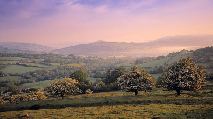 field, photography, trees, nature, landscape, hills, plants