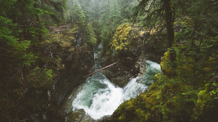 forest, British Columbia, waterfall, mist, Canada, river, landscape, Vancouver Island, shrubs, trees, nature, moss