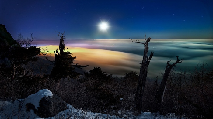 snow, trees, moonlight, South Korea, landscape, shrubs, dead trees, stars, clouds, winter, nature, moon