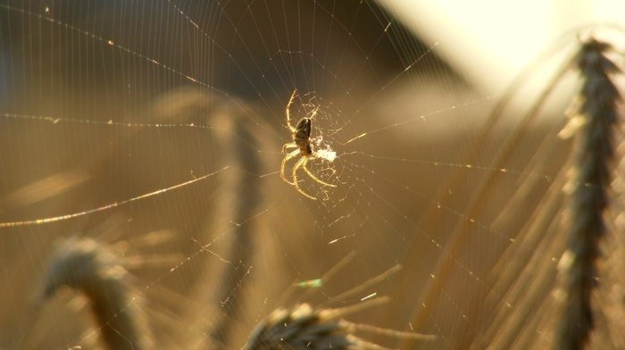 macro, spider, animals