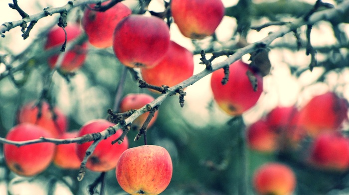 apples, macro, plants