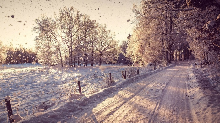 road, photography, landscape, branch, snow, winter, nature, plants, trees