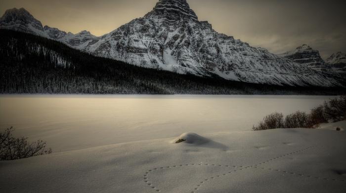 winter, landscape, mountains, snow, nature, trees, plants, photography