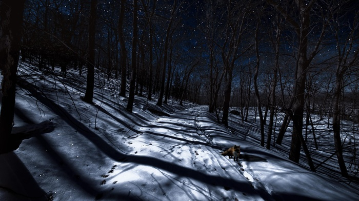 night, fox, trees, winter, animals