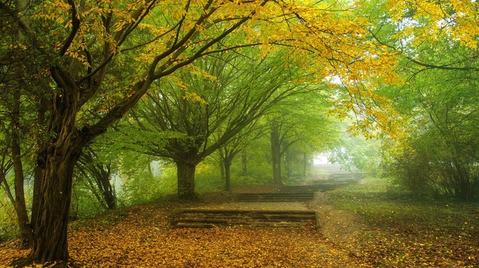 trees, nature, landscape, path, walkway, park, green, leaves, fall, yellow, mist, morning