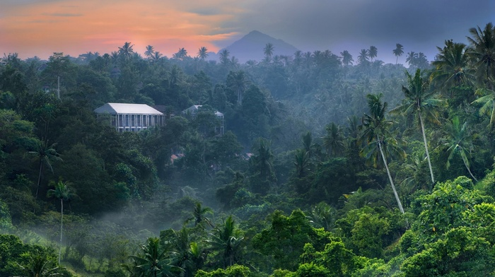Bali, tropical forest, jungle, mist, palm trees, landscape, mountains, sky, Indonesia, nature, building