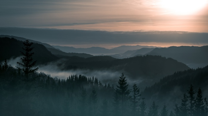 landscape, Norway, forest, trees, mountains, mist, pine trees, nature, clouds, hills