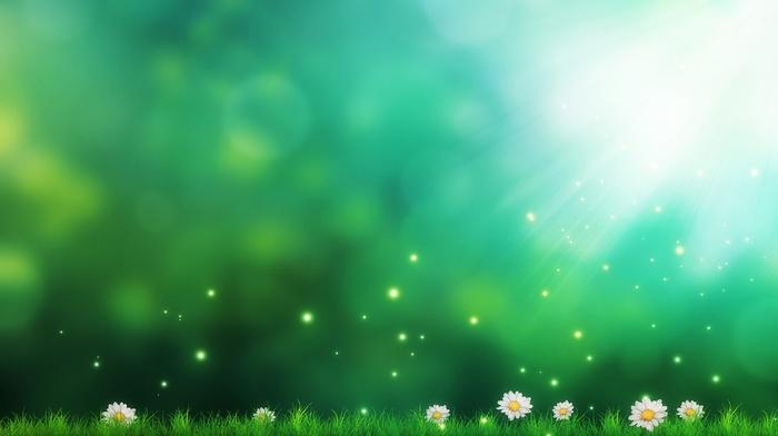 daisies, grass, sun rays